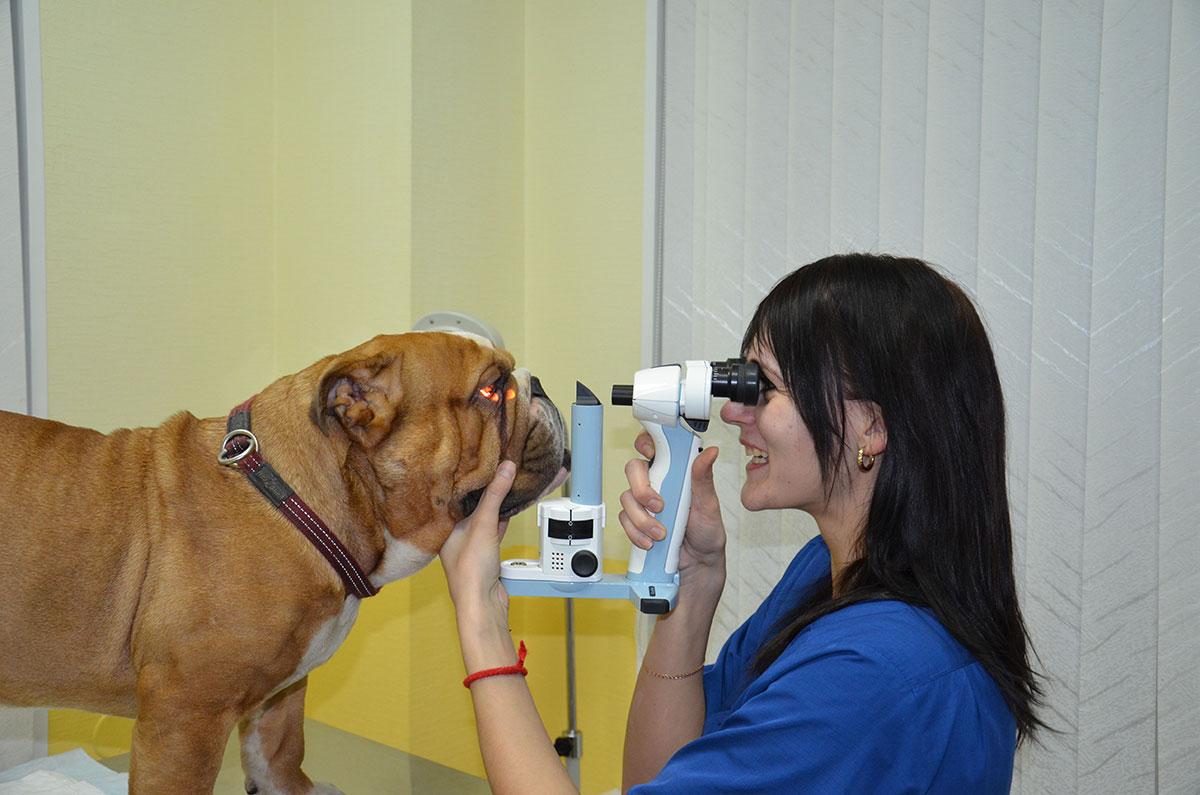 Офтальмоскопия – с помощью прямого панорамного офтальмоскопа PanOptic