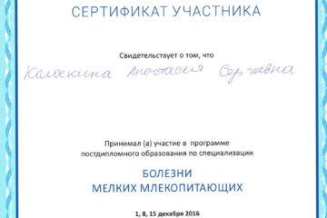 Сертификат Колоскиной А.С.